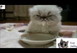 CATS Epic Funny Compilation