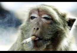 Most Funny Monkey Videos 2014