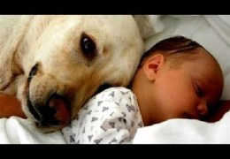 Cats and dogs meeting babies for the first time – Cute animal