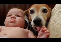 Dogs and cats protecting babies – Cute animal compilation