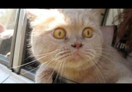Cats and dogs on their first car ride – Cute and funny animal compilation