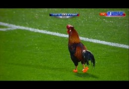 Comedy Football ● Funny Fails