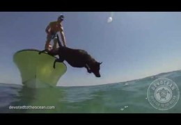 Dog to dive into sea and catch a lobster his Owner trained