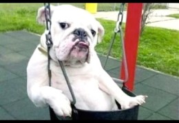 Funny Dogs – A Funny Dog Videos Compilation 2015