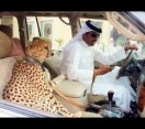 Shocking Things That Only Exist In Dubai