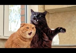 Cats are simply the funniest animals – Funny cat compilation