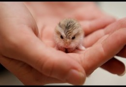 These Little Cute Animals Will Warm Your Heart