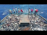 Amazing Fast Tuna Fishing Skill, Catching Tuna on The Big Sea