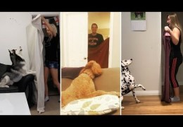 Dogs React To Magic Trick With Blanket 🔴 Perros Reaccionan Truco De Magia Con Manta
