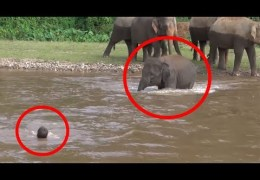 7 Times ANIMALS SAVING HUMANS Caught On Camera