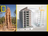 See How Termites Inspired a Building That Can Cool Itself | Decoder