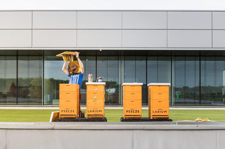 Hodowla miejskich pszczół