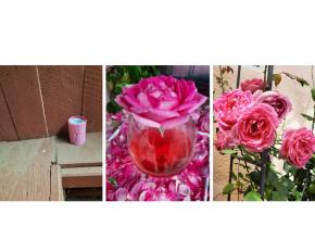 Roz. Rosé. Roses