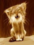 Manul Cat