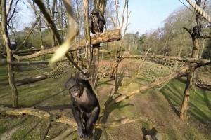 Netherlands Chimp Dronebuster