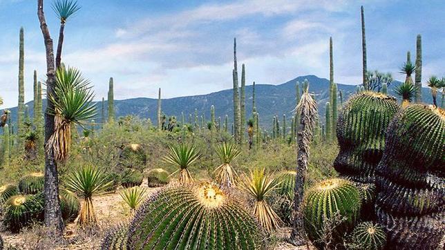 Reserva de la Biósfera Tehuacán.Cuicatlán