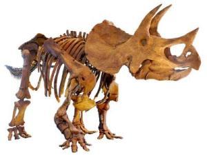 triceratops_0
