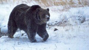 scarface oso