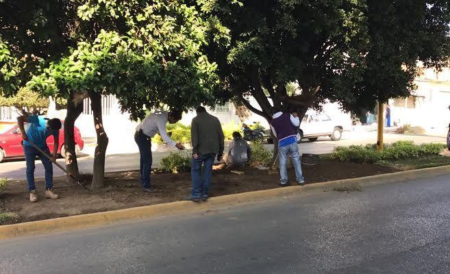 Realiza Ayuntamiento capitalino mantenimiento y conservación de áreas verdes de camellones (17:00 h)