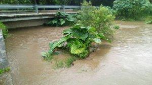 rio platanar