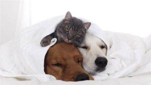 mascotas frio