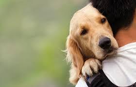 perro abrazando a su amo