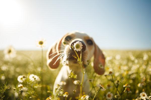 Plantas peligrosas para las mascotas (11:00 h)