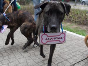 perro-abandonado-adopcion