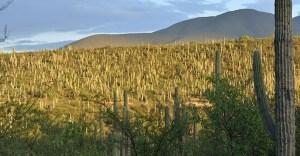 valle de cuicatlan-tehuacan