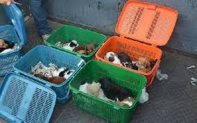 comercio ilegal de cachorros