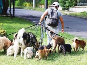 Cuidadores de perro