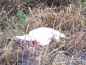 asesinado matias romero