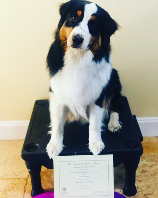 AKC Trick Dog Performer title