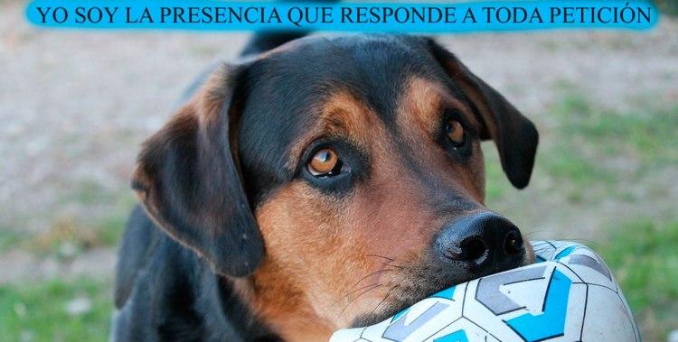 YO SOY LA PRESENCIA QUE RESPONDE A TODA PETICIÓN