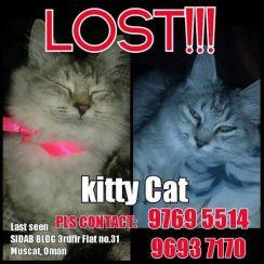 kitty missing cat sidab