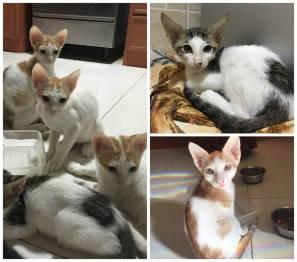 8 kittens oman.jpg1