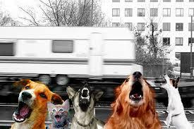 chiens qui aboient caravane qui passe