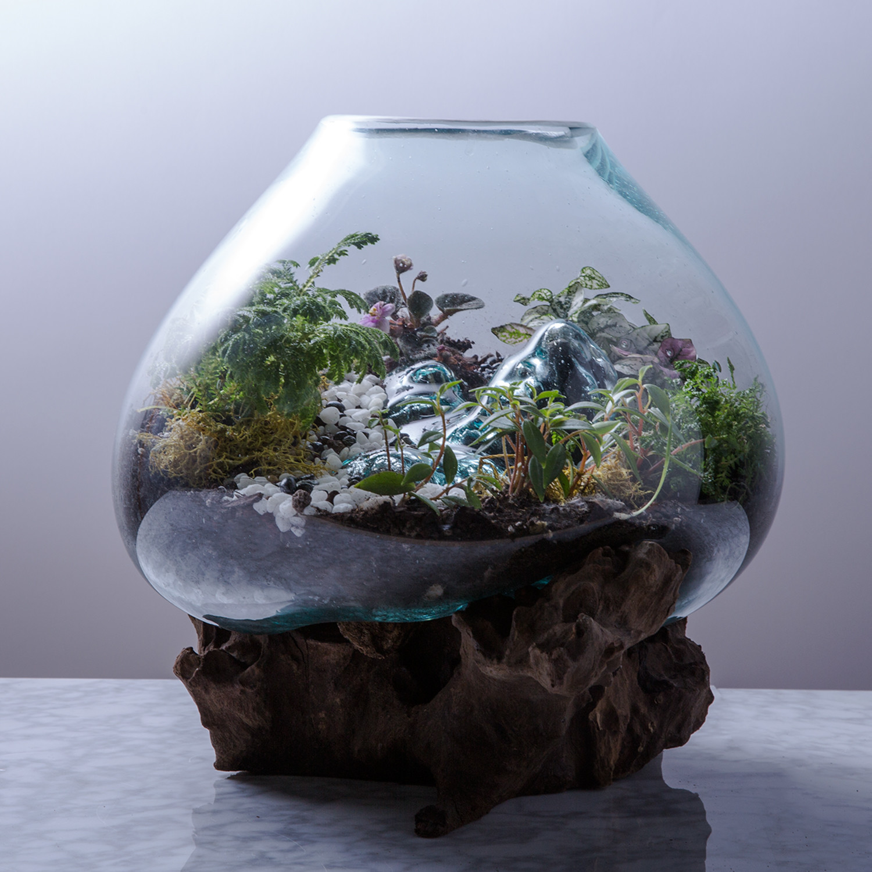 Spectacular Design Bowls Of Molten Glass On Teak Roots