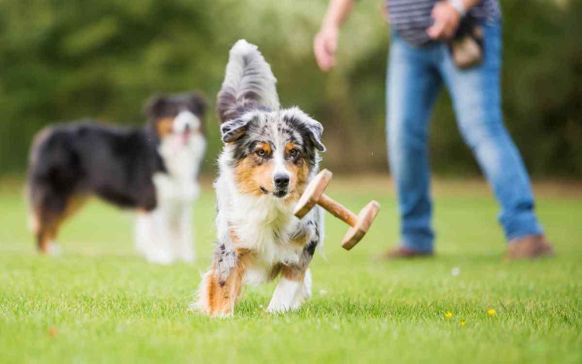 https://i0.wp.com/adorablebulldogs.com/wp-content/uploads/2018/09/post_01.jpg?fit=1200%2C750&ssl=1