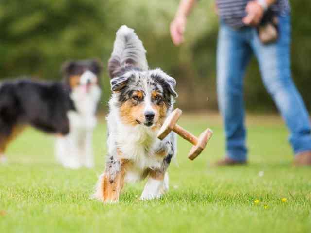 https://i0.wp.com/adorablebulldogs.com/wp-content/uploads/2018/09/post_01.jpg?resize=640%2C480&ssl=1