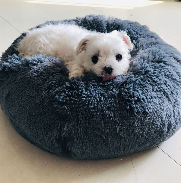 Calming Pet Bed for Cat or Small Dog Beds Beds Cats Dogs Color: Gray Size: 100cm