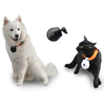 Pet Collar with Camera for Dog or Cat