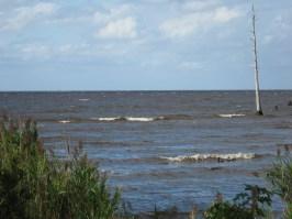 Alligator Wildlife Preserve
