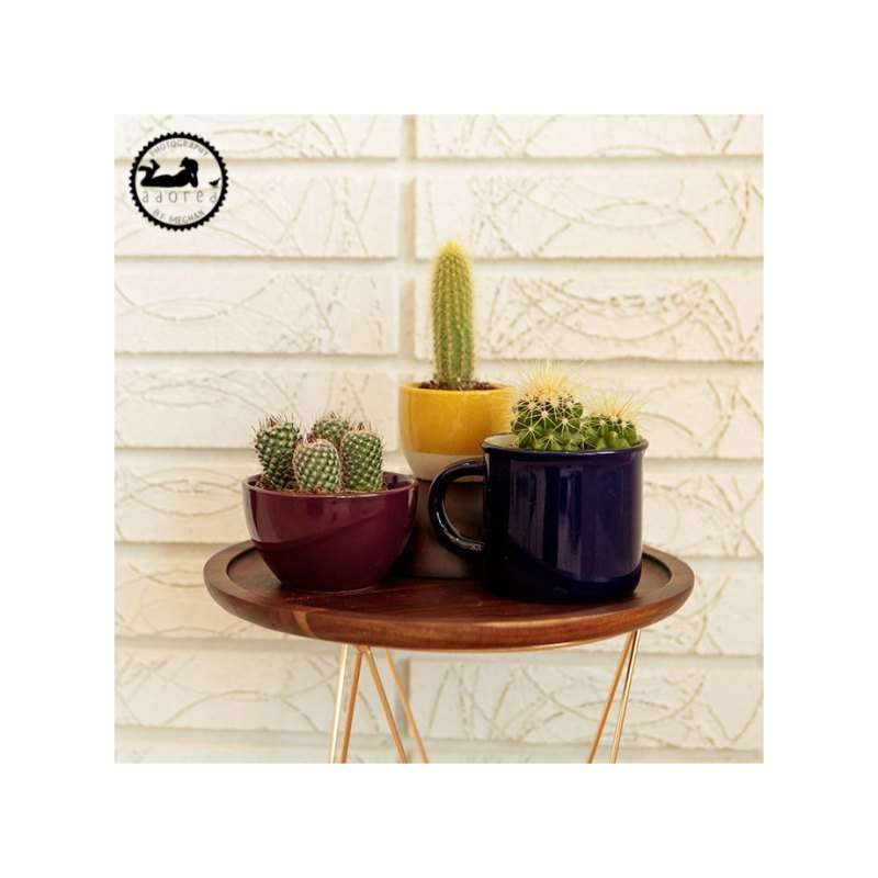 Cacti arrangement on table
