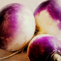 Watercolor Turnips