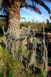 Fishing nets hung up to dry at the edge of the property