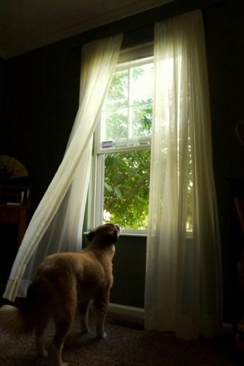 josie at the window3