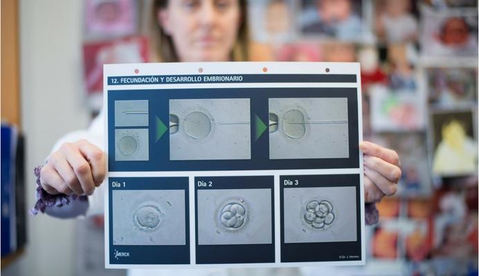 fecundacion in vitro 2