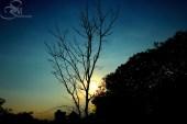 Summer is Coming.... Leaves has fallen, we should make arrangements. Summer is coming......