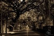 Roads Untraveled...